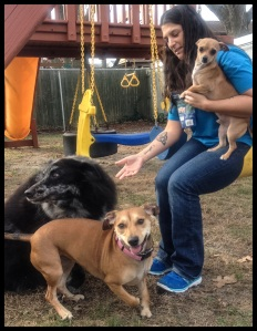 Kristine with her forever dogs: Joey, Derby, and Beanie